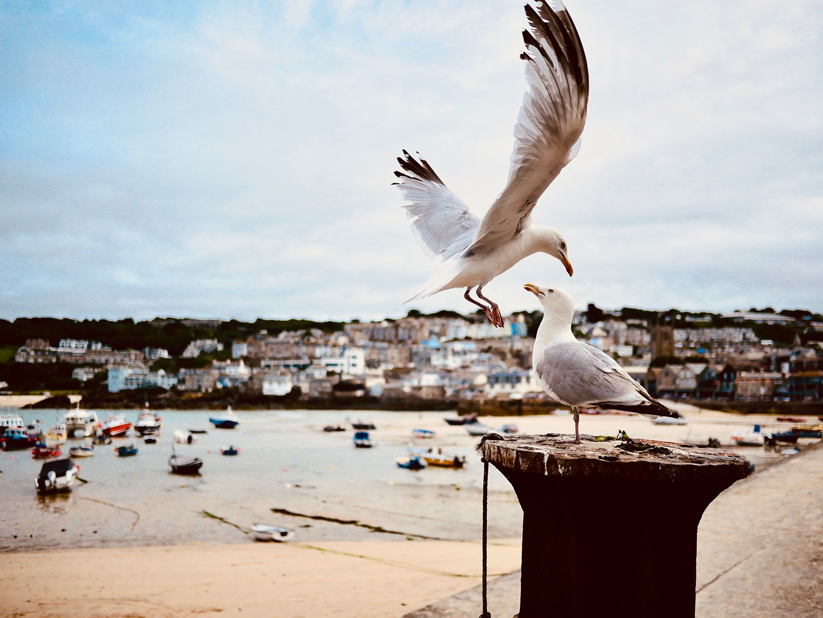 Seagulls at St Ives harbour.
